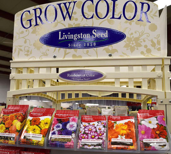 Lingston Seed Color